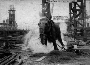 Topsy_elephant_death_electrocution_at_luna_park_1903